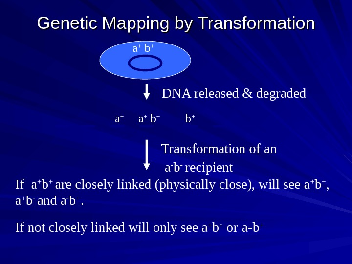 Genetic Mapping by Transformation a + b + b + a + Transformation of