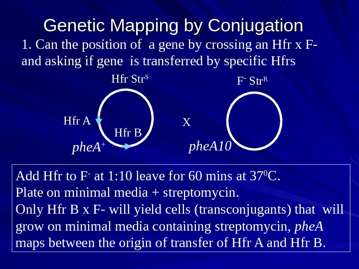 Genetic Mapping by Conjugation  1. Can the position of a gene by crossing