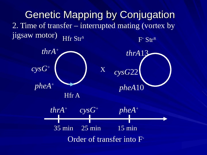 Genetic Mapping by Conjugation  2. Time of transfer – interrupted mating (vortex by