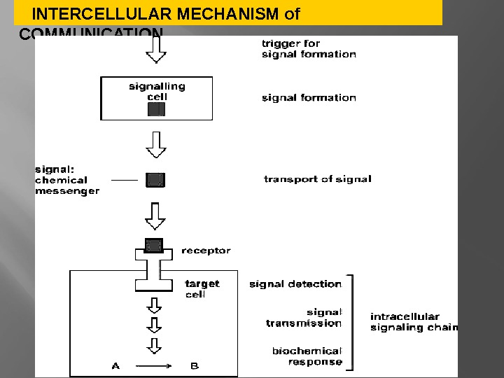 INTERCELLULAR MECHANISM of COMMUNICATION