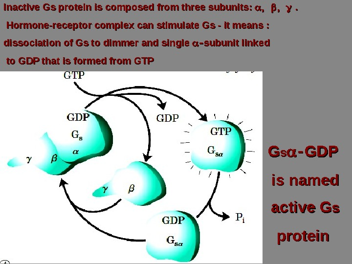 Inactive Gs protein is composed from three subunits:   . . Hormone-receptor complex can stimulate