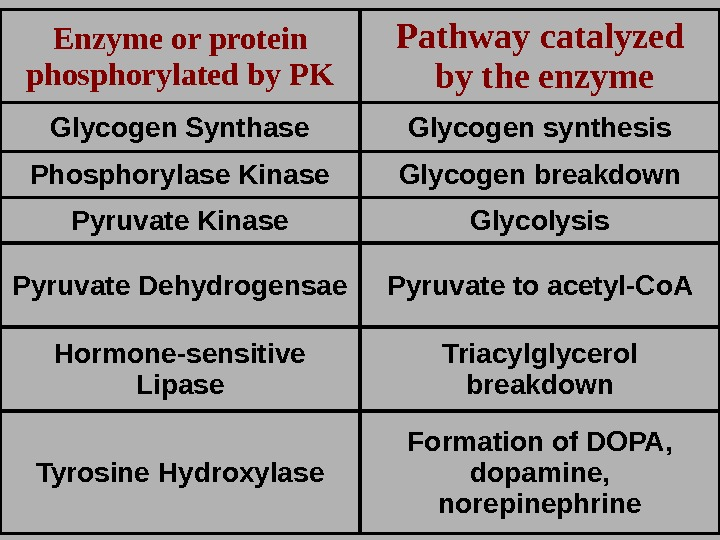 Enzyme or protein phosphorylated by PK Pathway catalyzed  by the enzyme Glycogen Synthase G lycogen