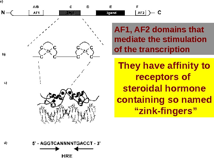 "They have affinity to receptors of steroidal hormone containing so named "" zink-fingers""AF 1, AF 2"