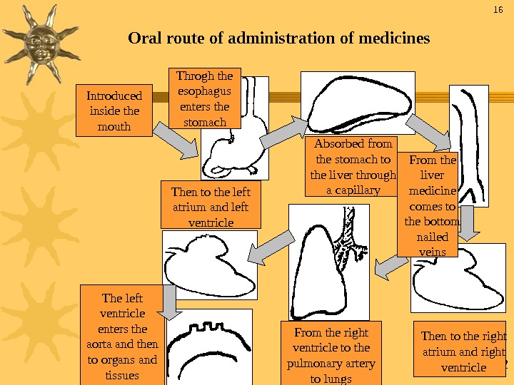 32 Oral route of administration of medicines Introduced inside the mouth Throgh the esophagus enters the