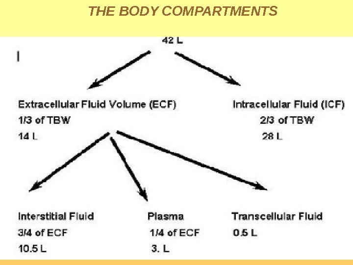 THE BODY COMPARTMENTS