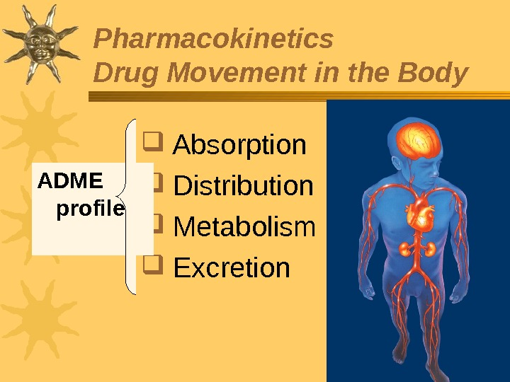 Pharmacokinetics Drug Movement in the Body  Absorption  Distribution  Metabolism  Excretion. ADME profile