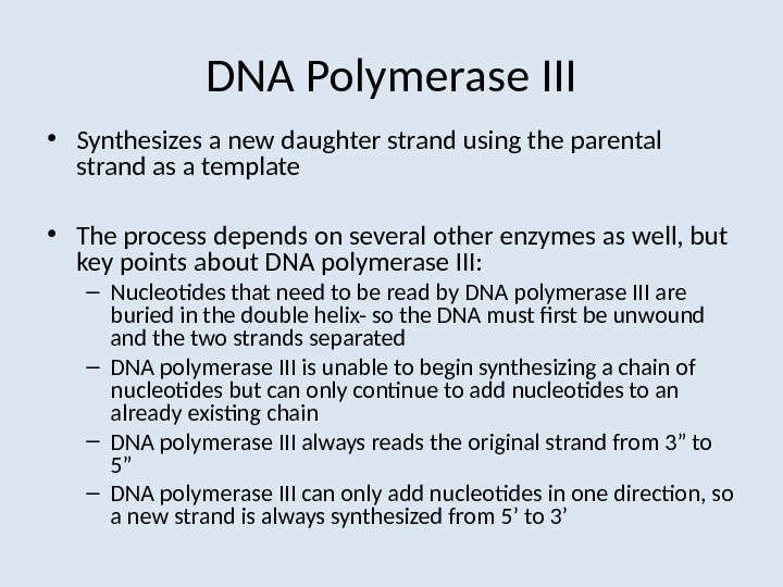 DNA Polymerase III • Synthesizes a new daughter strand using the parental strand as a template