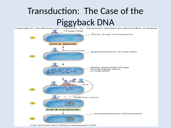 Transduction:  The Case of the Piggyback DNA