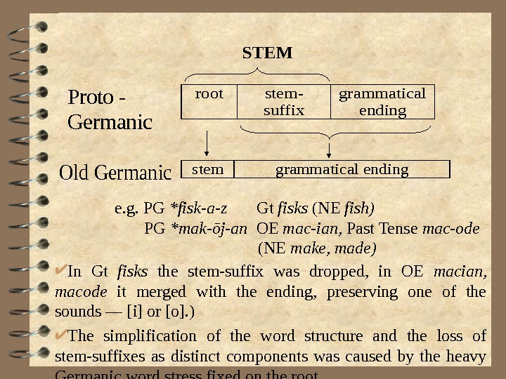 Proto - Germanic rootstem- suffix grammatical ending stemgrammatical ending. Old Germanice. g. PG *fisk-a-z