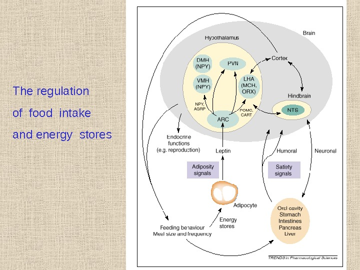 The regulation of food intake and energy stores