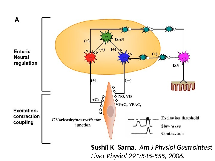 Sushil K. Sarna,  Am J Physiol Gastrointest Liver Physiol 291: 545 -555, 2006.
