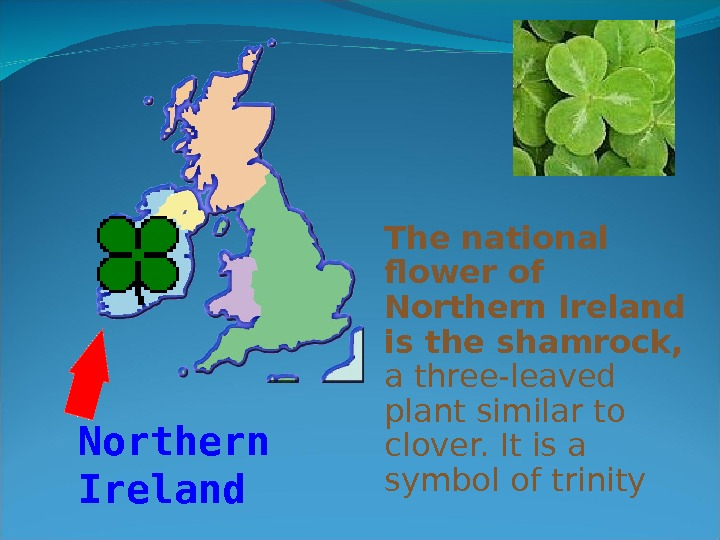 The national flower of Northern Ireland is the shamrock,  a three-leaved plant similar to clover.