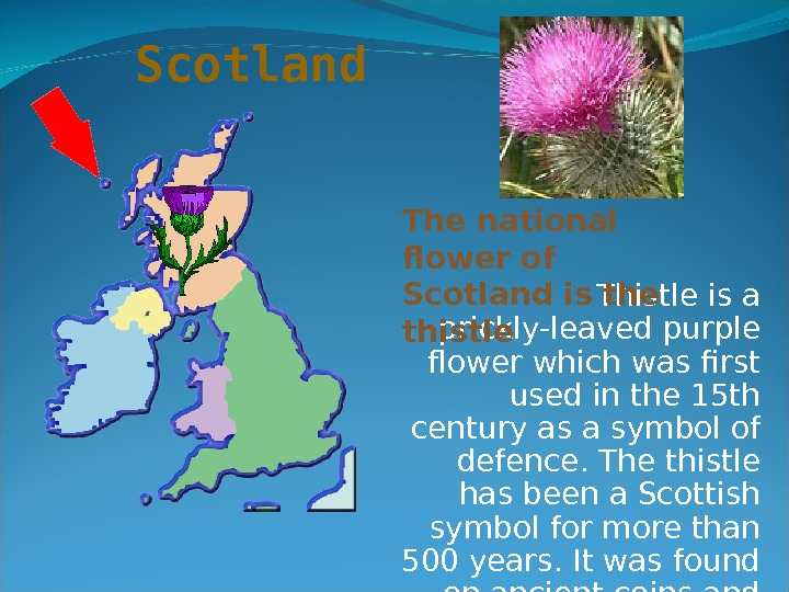 Thistle is a prickly-leaved purple flower which was first used in the 15 th century as
