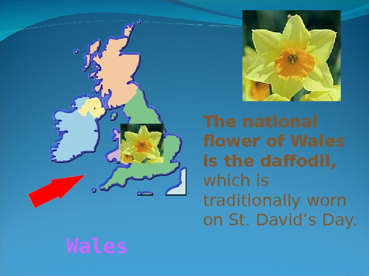 The national flower of Wales is the daffodil,  which is traditionally worn on St. David's