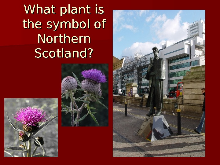 What plant is the symbol of Northern Scotland?