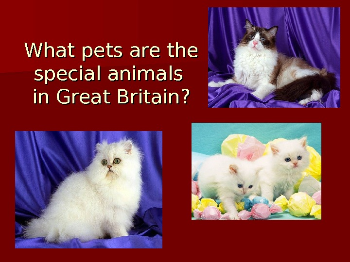 What pets are the special animals in Great Britain?