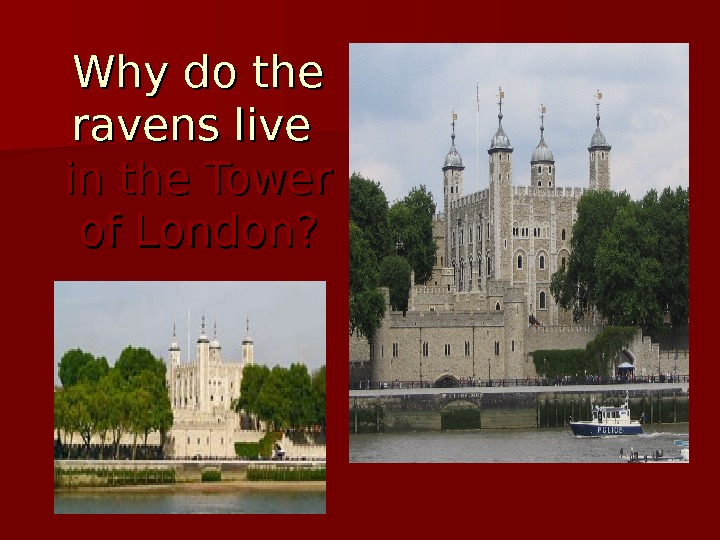 Why do the ravens live in the Tower of London?