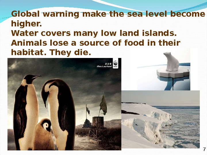 Global warning make the sea level become higher. Water covers many low land islands. Animals lose