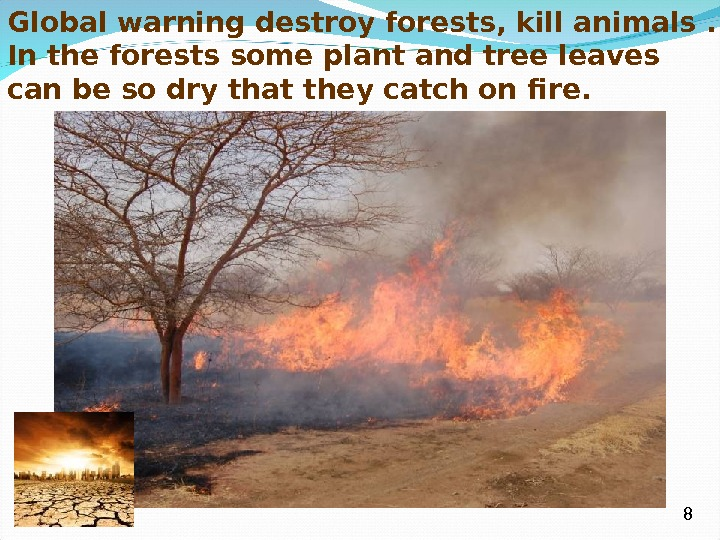 Global warning destroy forests, kill animals. In the forests some plant and tree leaves can be