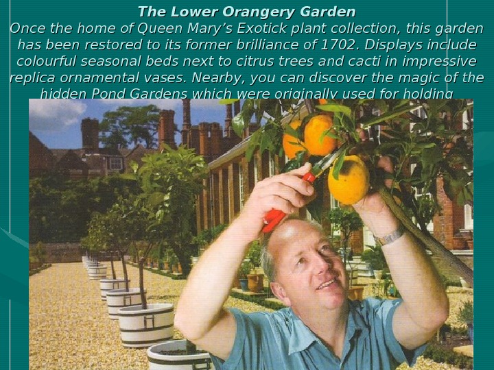 The Lower Orangery Garden Once the home of Queen Mary's Exotick plant collection ,