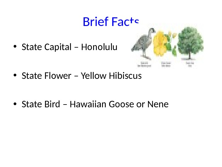 Brief Facts • State Capital – Honolulu • State Flower – Yellow Hibiscus • State Bird