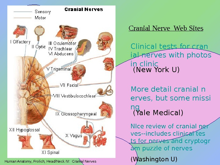 Human Anatomy, Frolich, Head/Neck IV:  Cranial Nerves Clinical tests for cran ial nerves with photos