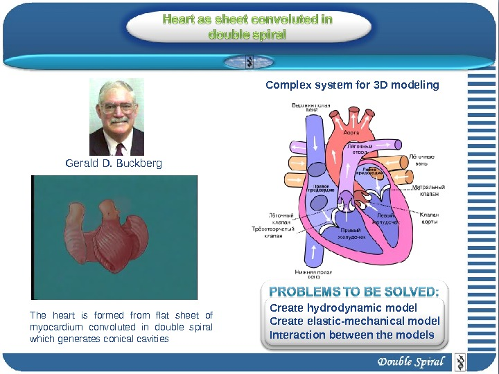 Gerald D. Buckberg The heart is formed from flat sheet of myocardium convoluted in double spiral
