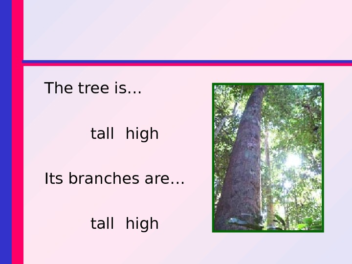 The tree is… tall high Its branches are… tall high