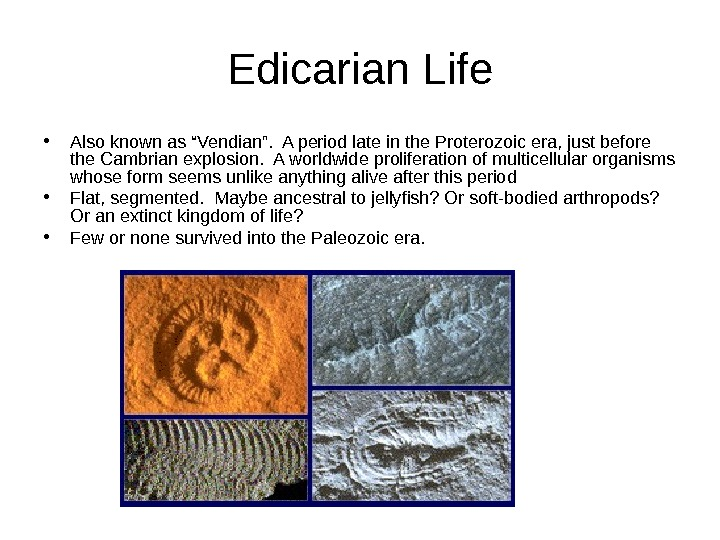 "Edicarian Life • Also known as ""Vendian"".  A period late in the Proterozoic"