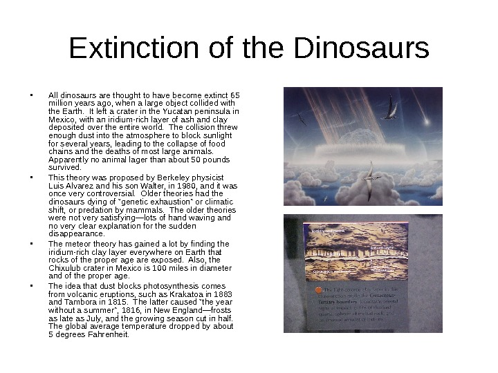 Extinction of the Dinosaurs • All dinosaurs are thought to have become extinct 65