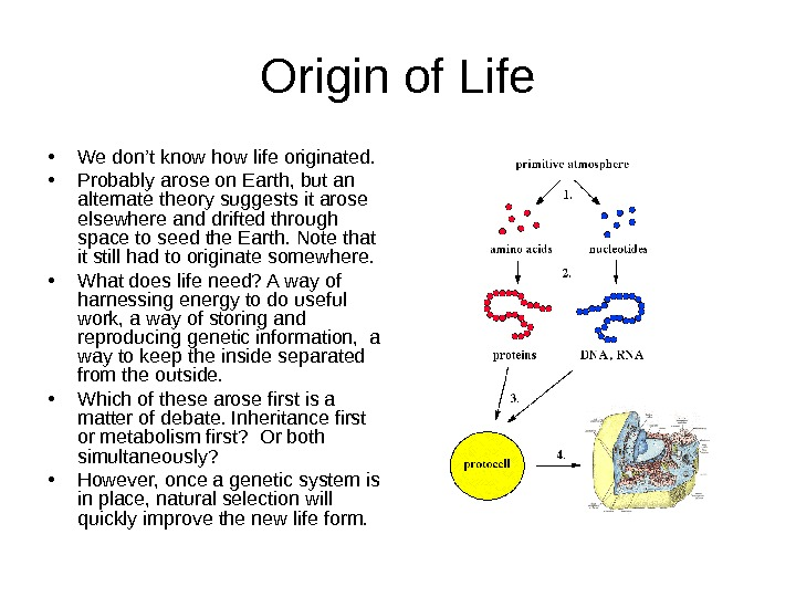 Origin of Life • We don't know how life originated.  • Probably arose