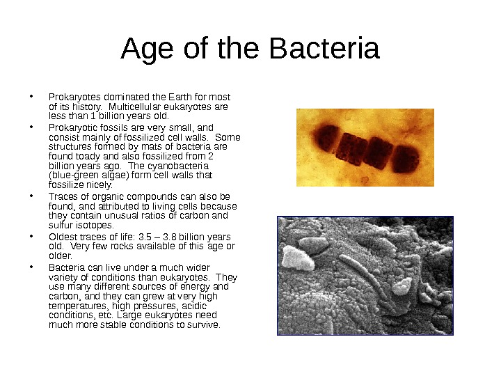 Age of the Bacteria • Prokaryotes dominated the Earth for most of its history.