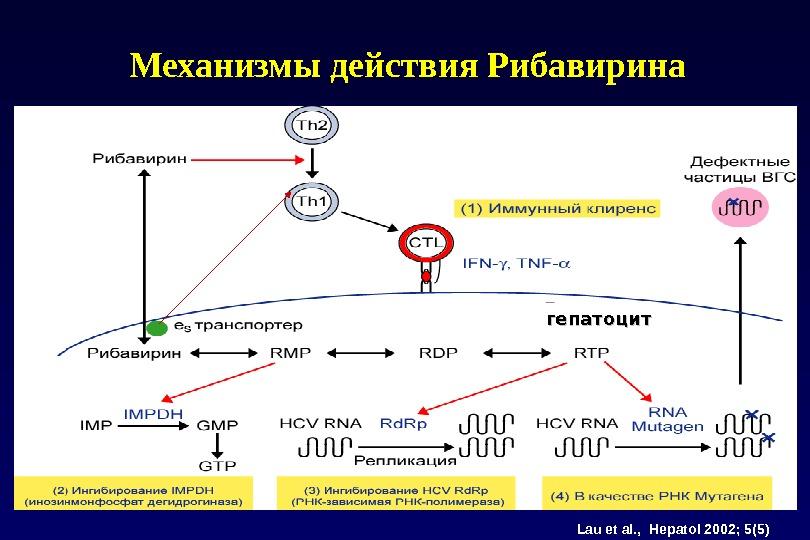 Lau et al. ,  Hepatol 2002; 5(5) гепатоцит. Механизмы действия Рибавирина