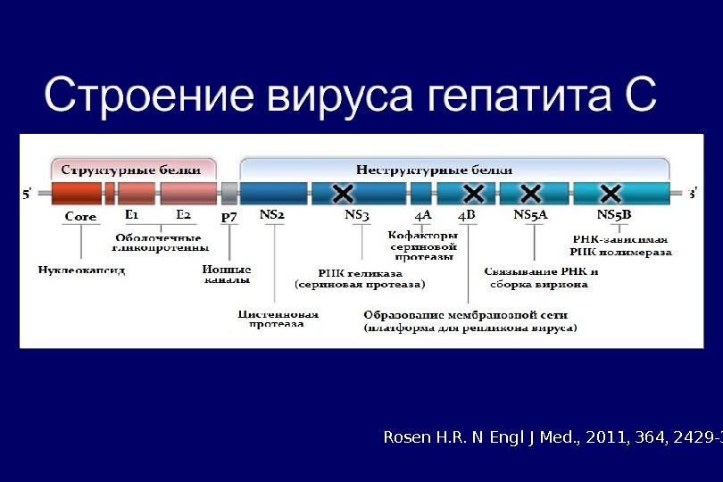 Rosen  H. R.  N Engl J Med. ,  2011 ,  364 ,
