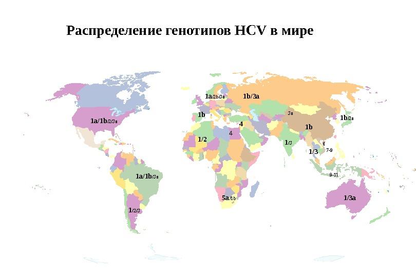 Распределение генотипов HСV в мире 1b 1a /2b/3a 1b/3а 4 5a /1b 7-9 9-1161a/1b /2/3a 1/2