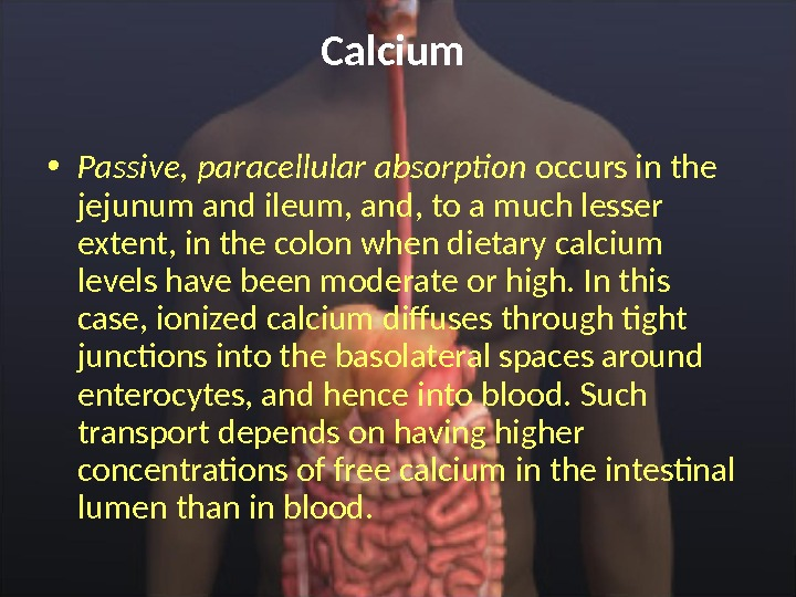 Calcium  • Passive, paracellular absorption occurs in the jejunum and ileum, and, to a much