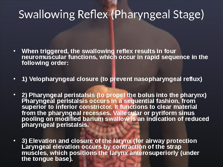 Swallowing Reflex (Pharyngeal Stage) • When triggered, the swallowing reflex results in four neuromuscular functions, which