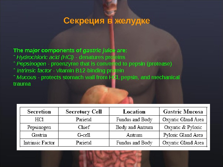 Секреция в желудке  The major components of gastric juice are: ˆ Hydrochloric acid (HCl) -