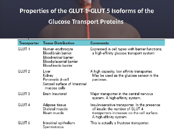 Properties of the GLUT 1 -GLUT 5 Isoforms of the Glucose Transport Proteins