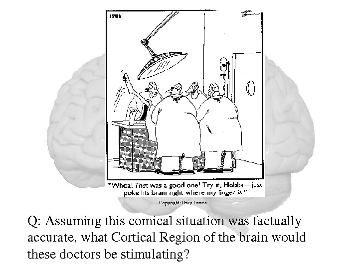 Q: Assumingthiscomicalsituationwasfactually accurate, what. Cortical. Regionofthebrainwould thesedoctorsbestimulating? Copyright: Gary. Larson