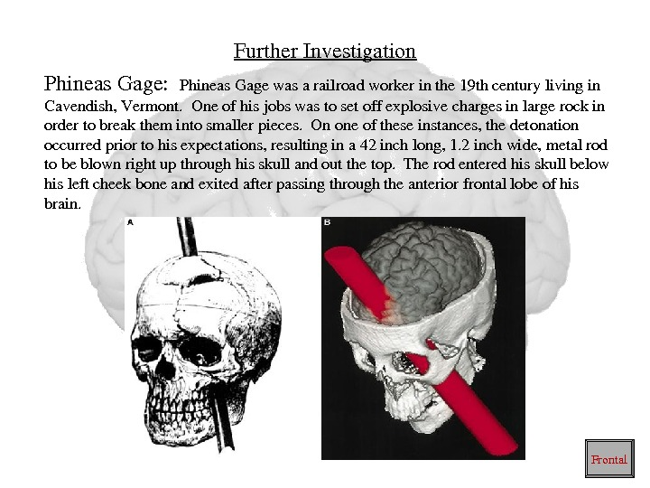 Further. Investigation Phineas. Gage: Phineas. Gagewasarailroadworkerinthe 19 thcenturylivingin Cavendish, Vermont. Oneofhisjobswastosetoffexplosivechargesinlargerockin ordertobreakthemintosmallerpieces. Ononeoftheseinstances, thedetonation occurredpriortohisexpectations, resultingina