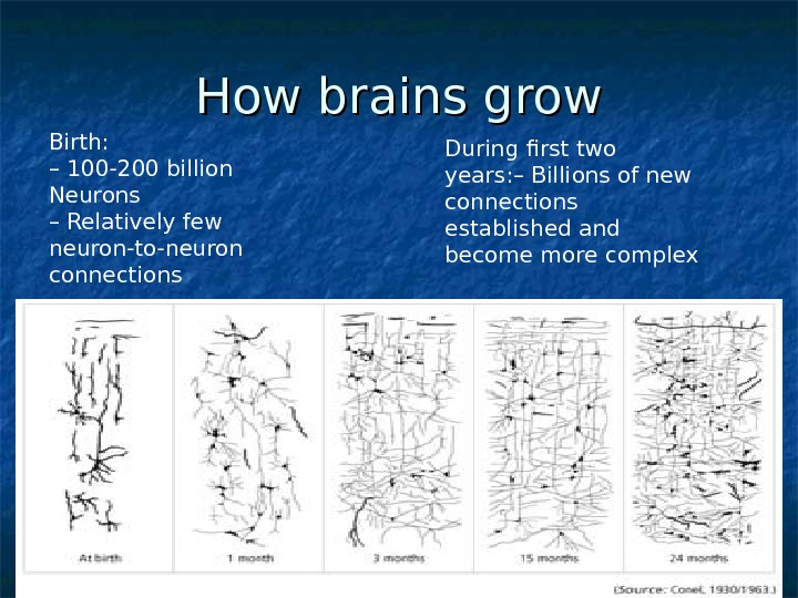 How brains grow Birth: – 100 -200 billion Neurons – Relatively few neuron-to-neuron connections During first