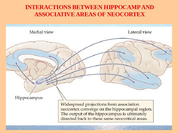INTERACTIONS BETWEEN HIPPOCAMP AND ASSOCIATIVE AREAS OF NEOCORTEX