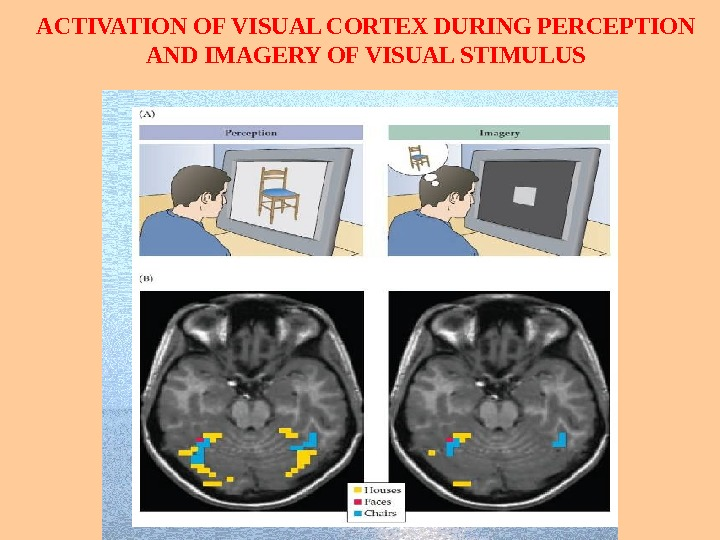ACTIVATION OF VISUAL CORTEX DURING PERCEPTION AND IMAGERY OF VISUAL STIMULUS
