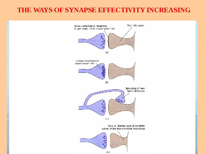 THE WAYS OF SYNAPSE EFFECTIVITY INCREASING