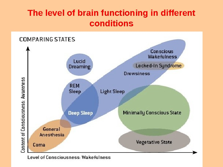 The level of brain functioning in different conditions