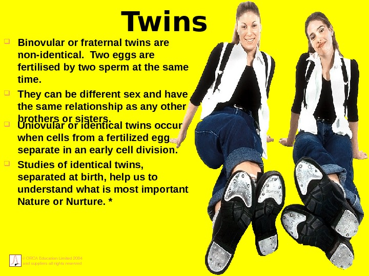 © ORCA Education Limited 2004 and suppliers all rights reserved Twins Binovular or fraternal twins are