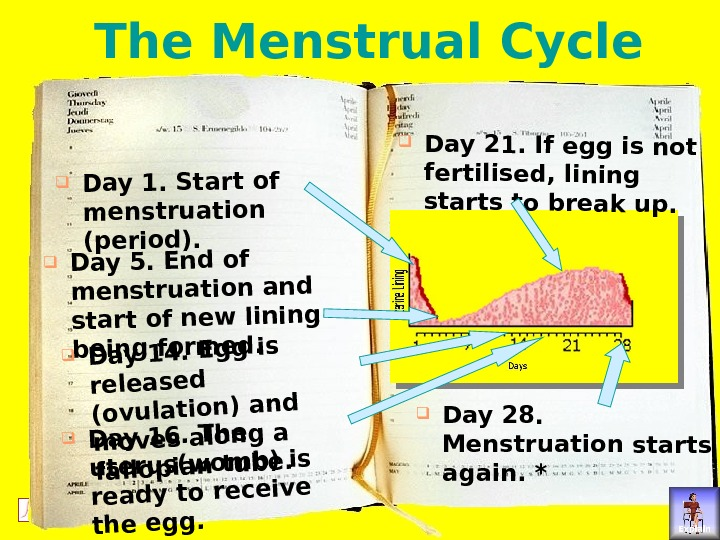 © ORCA Education Limited 2004 and suppliers all rights reserved The Menstrual Cycle. Day 1. Start