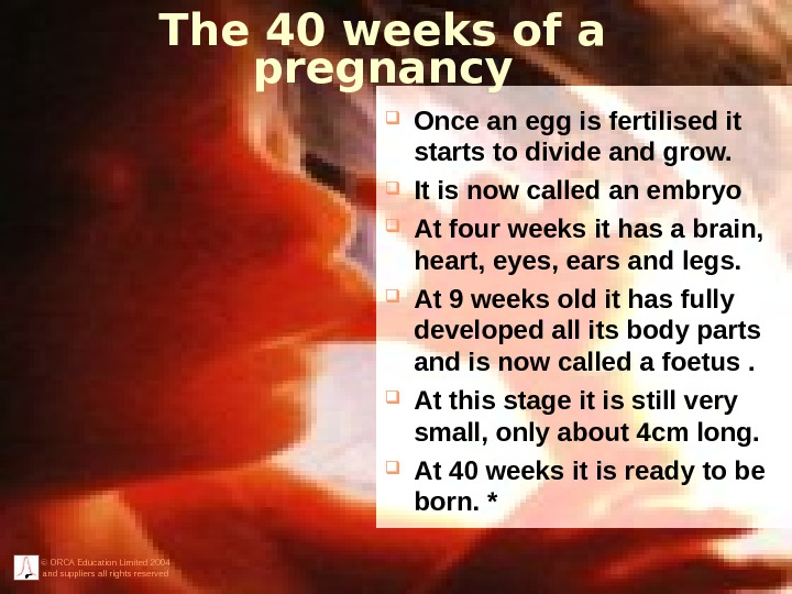 © ORCA Education Limited 2004 and suppliers all rights reserved The 40 weeks of a pregnancy