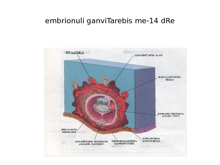 embrionuli ganvi. Tarebis me-14 d. Re